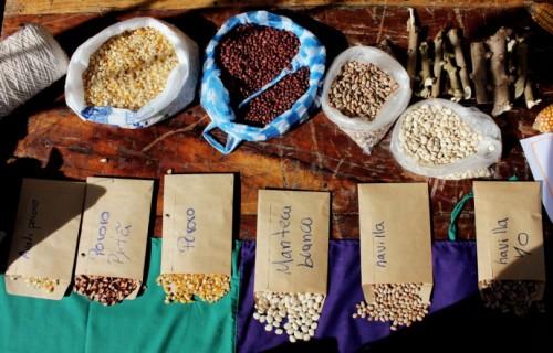 Paraguay - reducción agricultura campesina